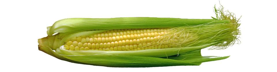 Vegetarier-Blog